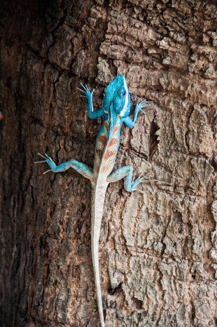 1021 best lizards chameleons salamanders reptiles crocodiles