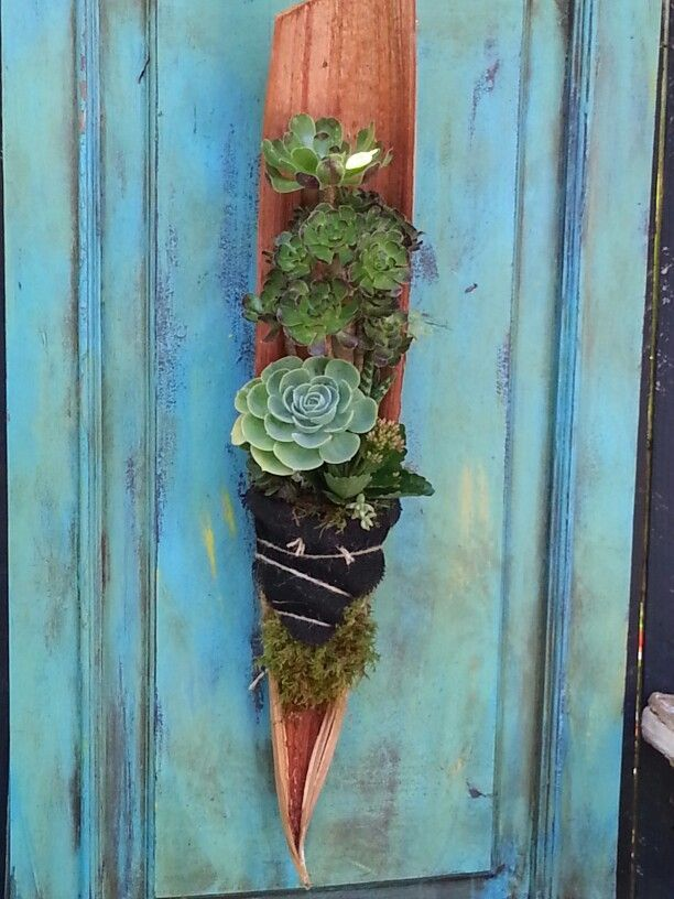 Love this shape palm seed pod planter with succulents for Weihnachtsideen dekoration