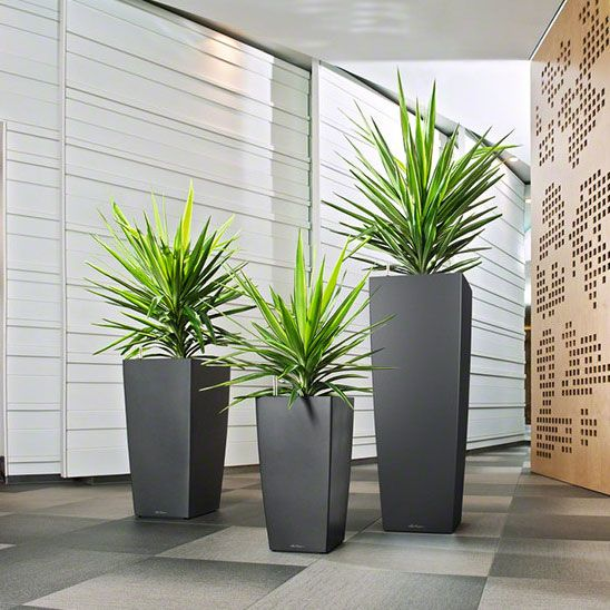 CUBICO combines elegance and attractiveness with the most convenient use and care. The wide range of sizes, colors, and accessories makes CUBICO perfect for any space, especially for tall plantings where space is limited. It also has CUBICO coasters which make the planter mobile even when planted. This classic planter features a unique sub-irrigation system that takes care of your plants for you for up to 12 weeks, ensuring that they receive the right amount of water and nutrients they need…