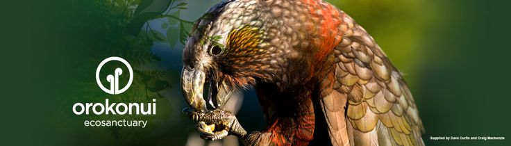 Orokonui Ecosanctuary. What a wonderful place to visit! A great chance for your children to see New Zealand birds up close!