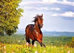 Koń, Łąka, Drzewo, Lato
