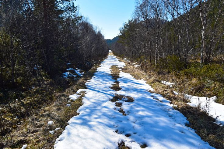 Hiking along a snow covered forest road on Straumøya