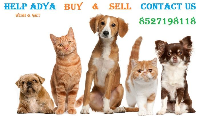 Looking To Buy Pets In Delhi You Ve Reached The Right Place In