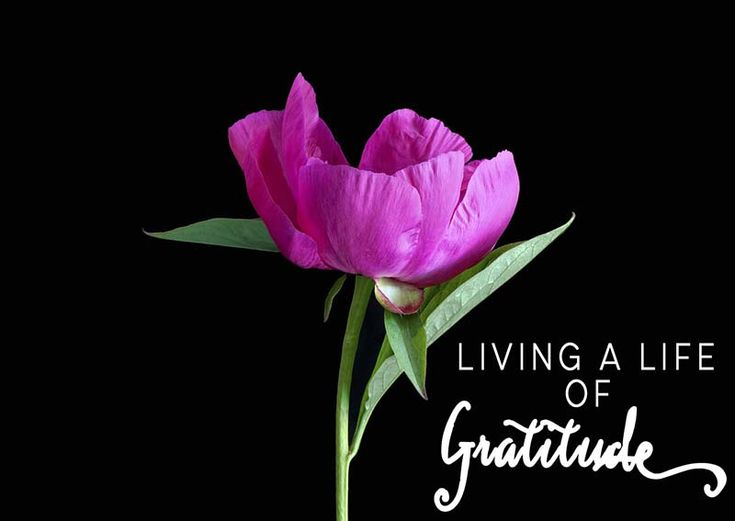We hear a lot about gratitude and being thankful, but what does that really look like when you are living it out in your day to day life?