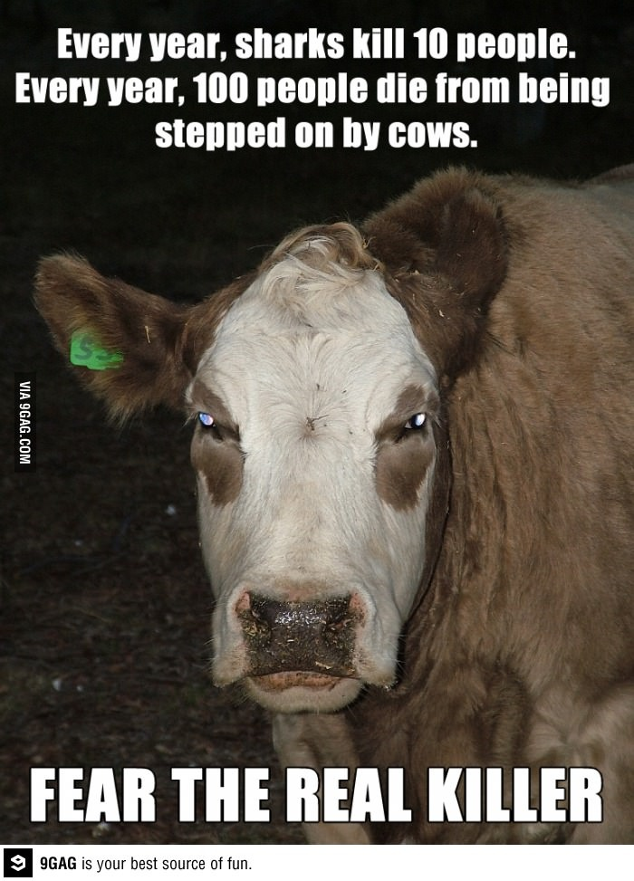 Why cows concern me so much.