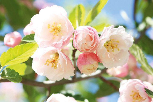 12 best spring flowers gallery 4 of 12 - Homelife