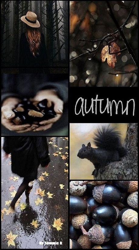 Autumn in Black By Sammie R