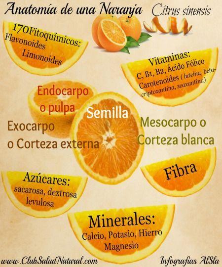 Anatomía de la Naranja y sus Nutrientes - Club Salud Natural
