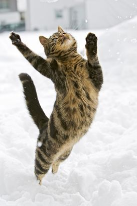I'm dancing in the snow , just dancing in the snow what a glorius feeling  ta da da da da.