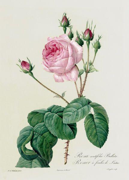 78 best images about botanical illustration tattoo for Botanical tattoo london