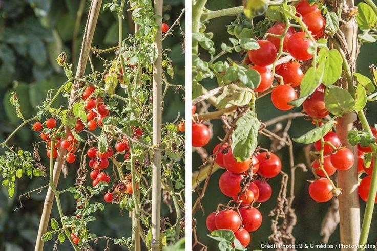 Les légumes pour paresseux : ils donnent sans aucun entretien
