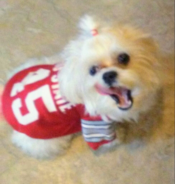 Malshi Prince with his Tounge in his Ohio State Jersey! 💓