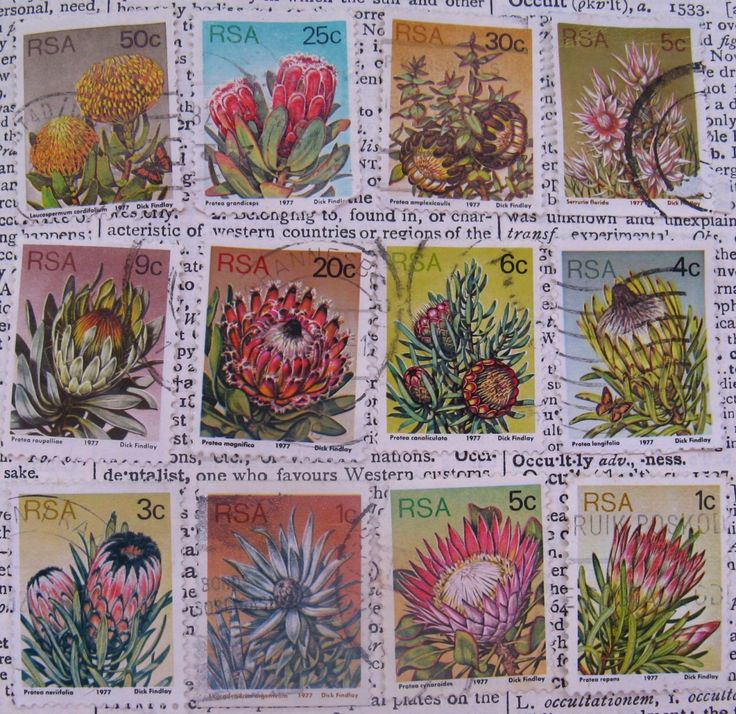 old South African postage stamps