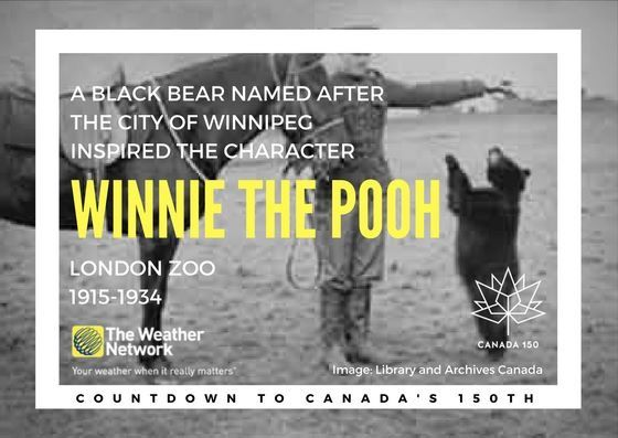 Rescued by Canadian Lt. Harry Colebourn, 'Winnie' was a favourite of author A. A. Milne's son Christopher Robin. Great 🇨🇦 fact 106/150 #Canada150