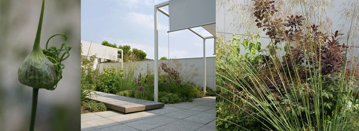 soft pale ivory paving | subtle bronze plum and green planting | contemporary garden || moderne-tuin-0-vis-a-vis-ontwerpers