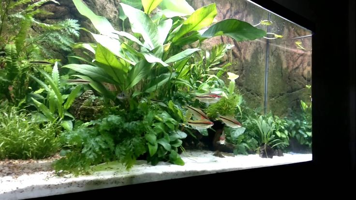 Best low maintenance low light low no co2 plants are for Low maintenance fish tank