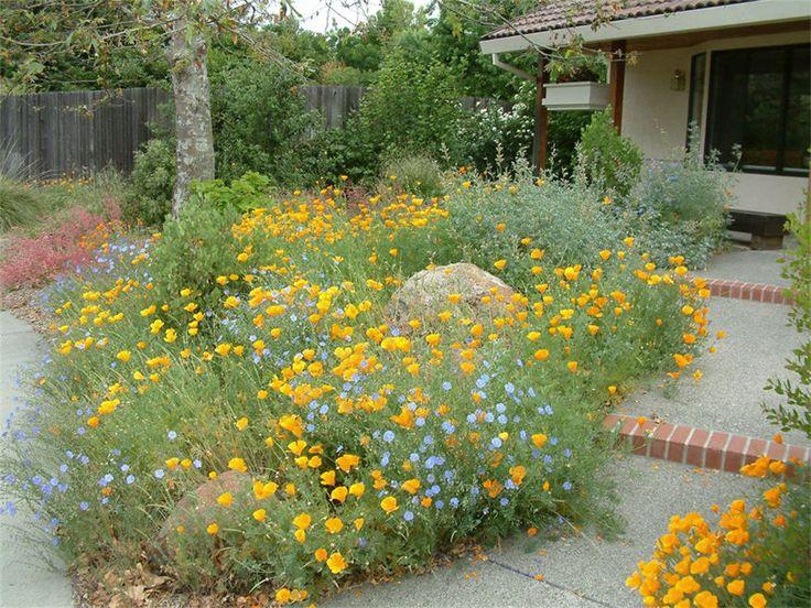 193 best California Native Gardens images on Pinterest | California ...