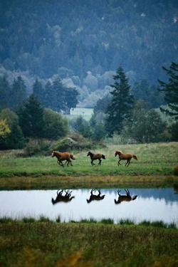 Let's run away and live on a horse ranch like this! Oh yes!!! Please!