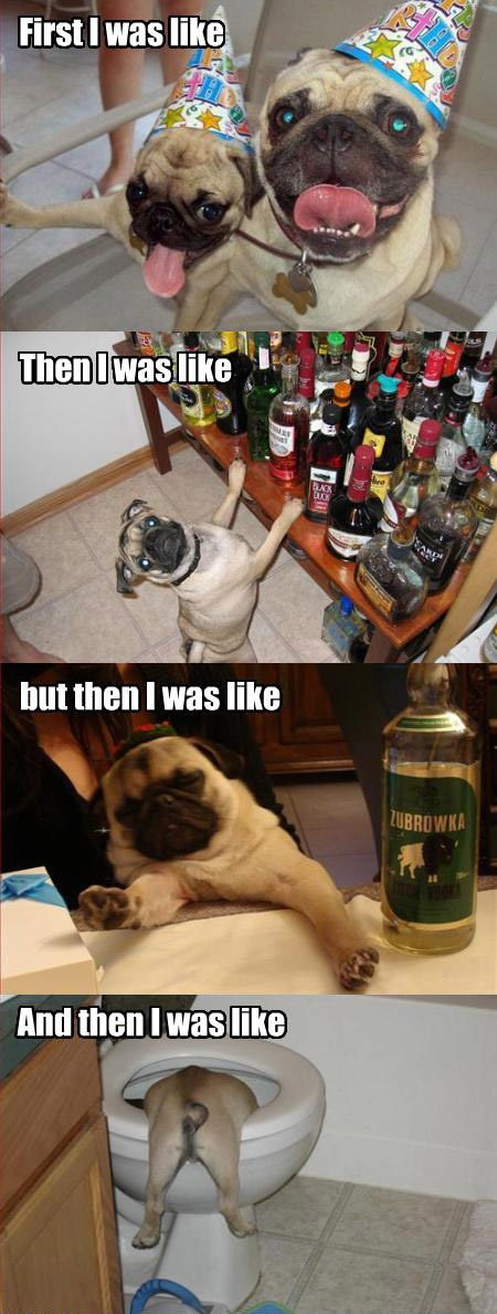 And then I was like...Parties Animal, Funny Dogs, Funny Pugs, 21St Birthday, Funny Animal, So Funny, Pugs Life, Friday Night, True Stories