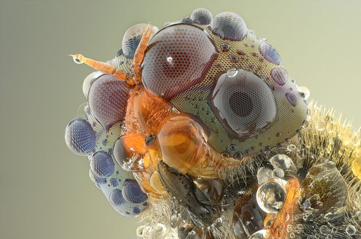 Wildlife photographer Yudy Sauw has captured close-up images of bugs .