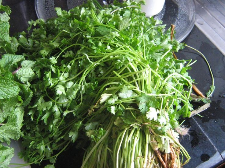 How to preserve coriander leaves for a long time / How to keep fresh coriander and mint leaves / step by step method | Vegetarian Indian Recipes