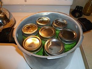 Complete guide to using a pressure cooker canner and green bean canning tutorial. Guide for the hot pack canning method to cut time and danger of burning yourself.