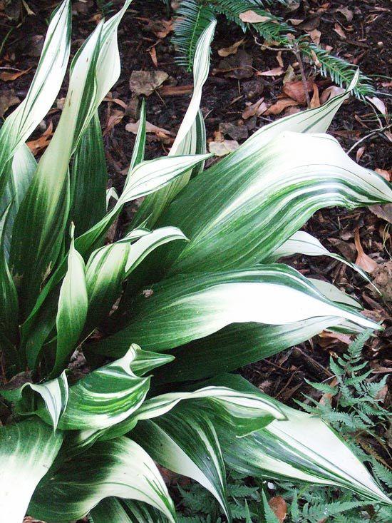 Houseplants for the forgetful gardener - Good house plant ...
