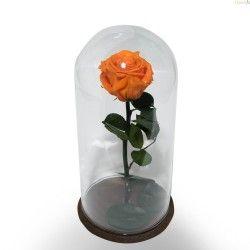 Rosa Naranja Preservada en Cristal