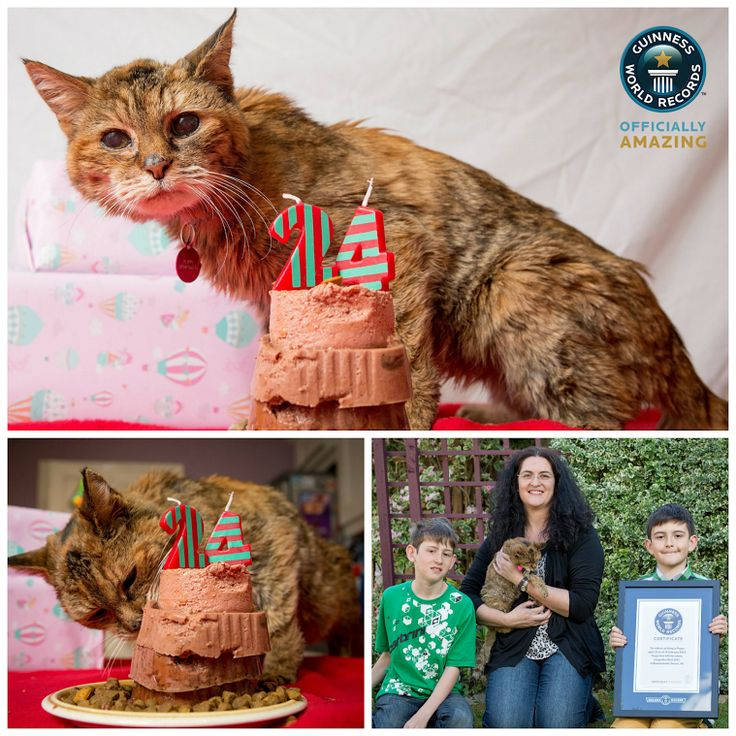 "Meet Poppy, the new oldest cat living record holder! 24 year old Poppy from Bournemouth, UK now holds the title of the oldest cat living. ""Poppy is definitely the top cat and she is still quite feisty. If one of the other cats tries to eat her food she will bite them on the ear,"" says owner Jacqui West. Poppy still has a way to go to beat the oldest cat ever, Creme Puff from Texas, USA - who lived to be 38!"