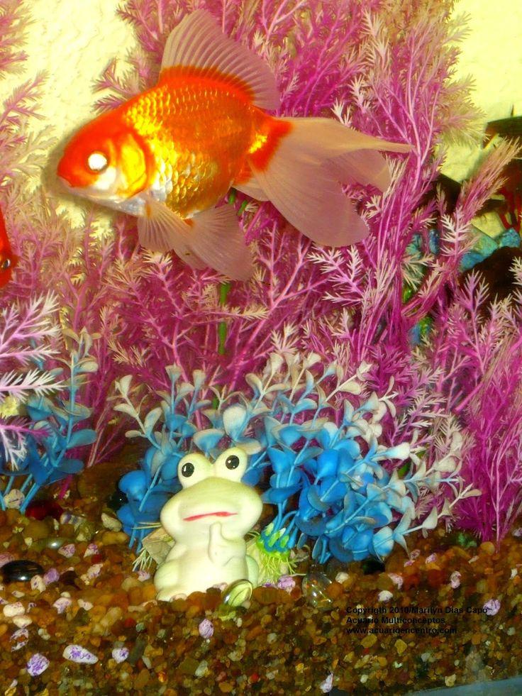 17 mejores ideas sobre peces de agua dulce en pinterest for Peces de agua estancada