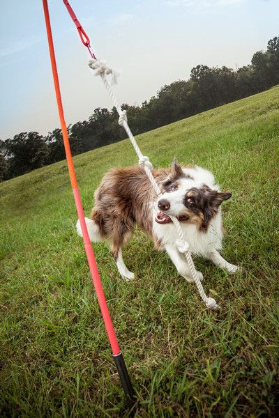 Tether Tug - Outdoor Interactive Tug Toy for Dogs - Made in USA-Available in nine sizes-$49.95 | www.activedogtoys.com #durable_toy #dog_tug_toys