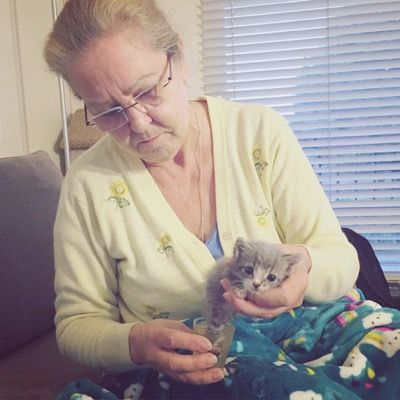 Mother Cat Leads Her Rescuer to Her Injured Baby - We Love Cats and Kittens