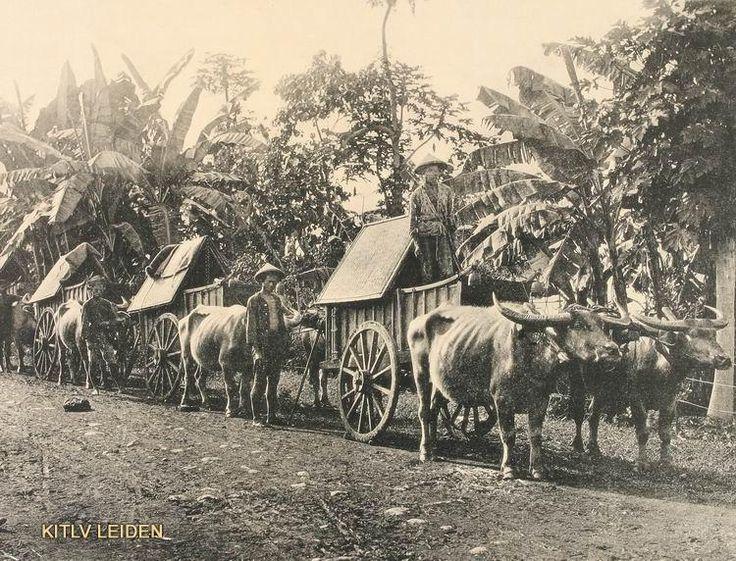 Buffalo carts Tjipadalarang Western Bandoeng 1880