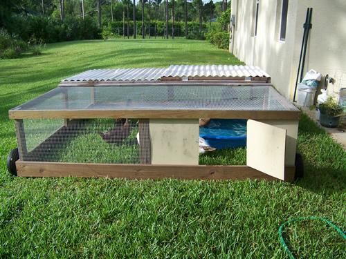 17 best images about garden duck pen on pinterest for How to build a duck shelter