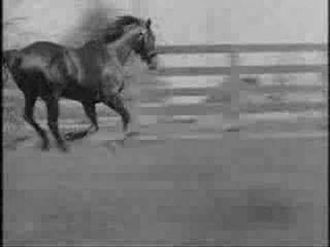 Man O' War [All videos, no photos] The greatest horse that ever lived!