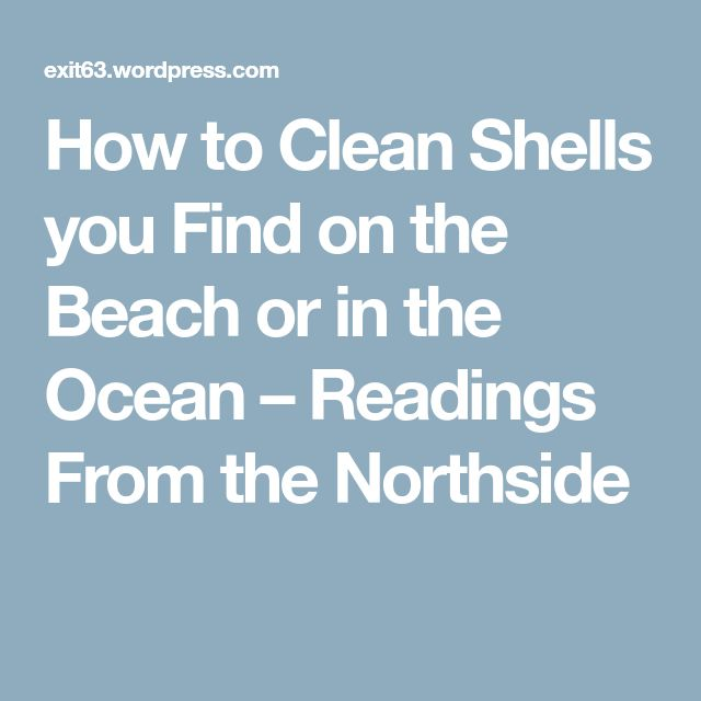 How to Clean Shells you Find on the Beach or in the Ocean – Readings From the Northside