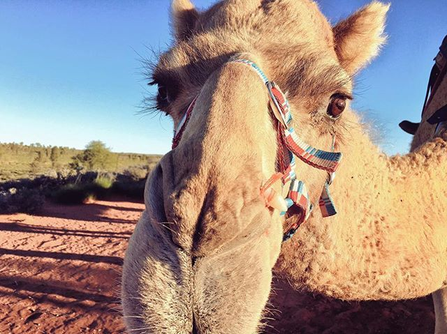 This time last week we were hanging out with this lovely lady. Go Jelly go! 🐪🐪