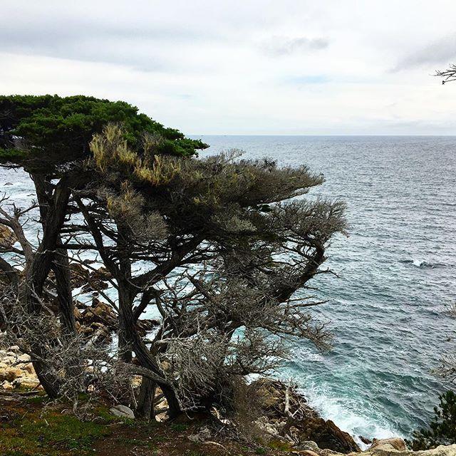 Воспоминания об отпуске #17miledrive #pacificbeach #cypress #california #калифорния #17мильнаядорога #тихийокеан #кипарисы #pacificbeachlocals #sandiegoconnection #sdlocals #sandiegolocals - posted by Anna Kiseleva  https://www.instagram.com/sunnykitten71. See more post on Pacific Beach at http://pacificbeachlocals.com