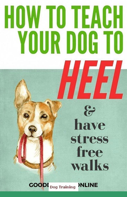 Puppy Training Killeen Tx Dogtraining And Dog Behavior Hip Check
