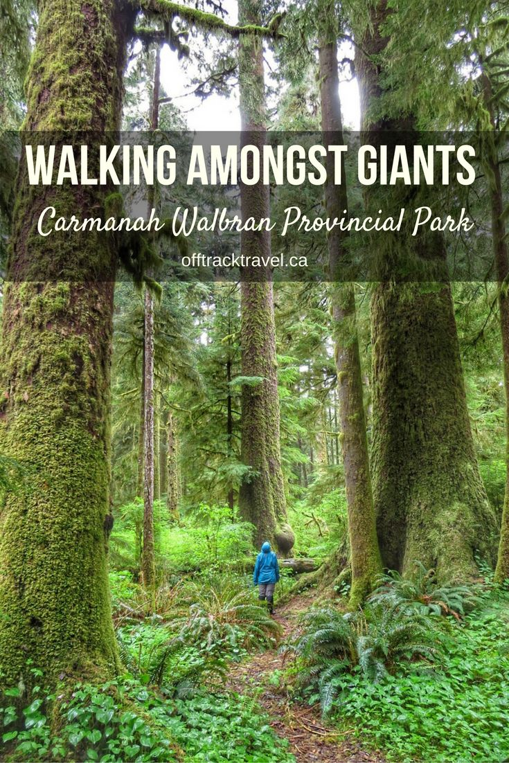 The biggest trees you may ever see - Vancouver Island's Carmanah Walbran Valley.