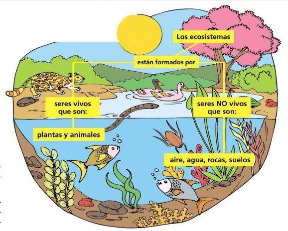 Como Dibujar Un Ecosistema Terrestre
