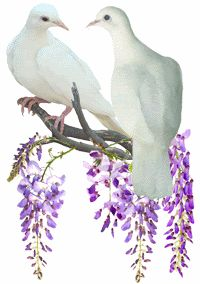 doves Pictures, Images and Photos