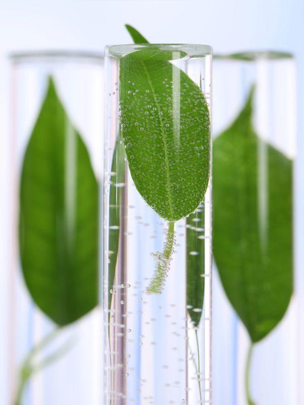 Les plantes, des solutions naturelles pour mieux dormir. #plantes