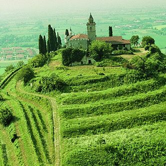 Wineyards in Franciacorta, Italy. #BerlucchiMood