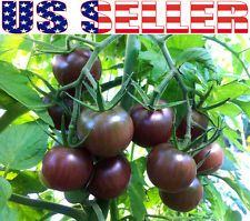 heirloom tomato seeds | eBay