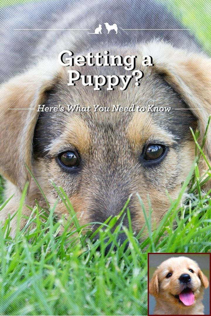 1 Have Dog Behavior Problems Learn About House Training A Lurcher