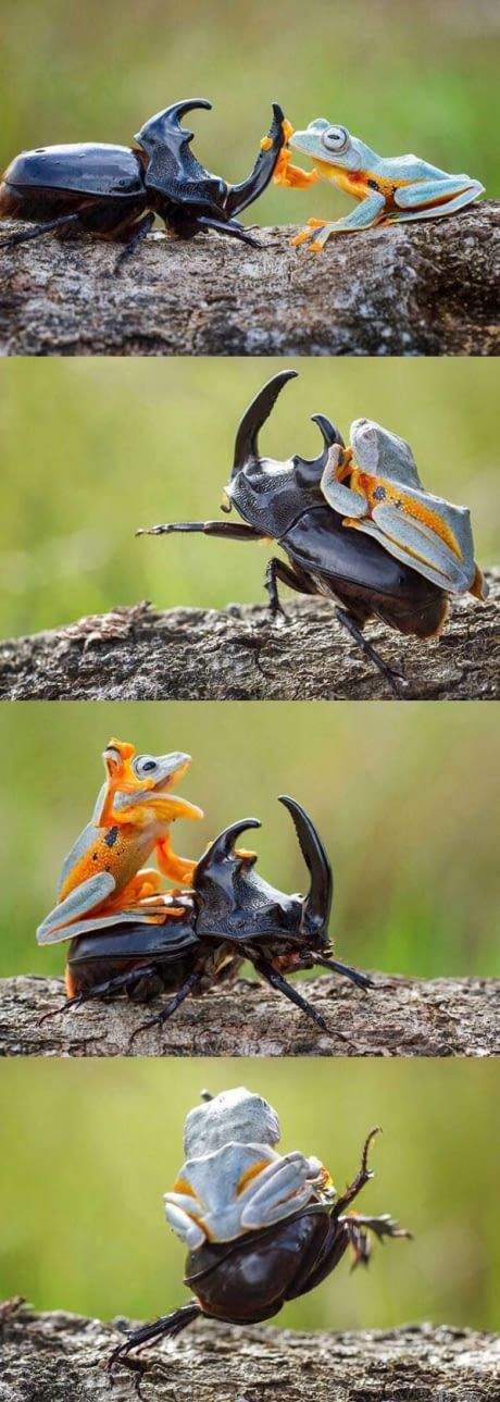 GO FORTH MY LOYAL STEED!!!