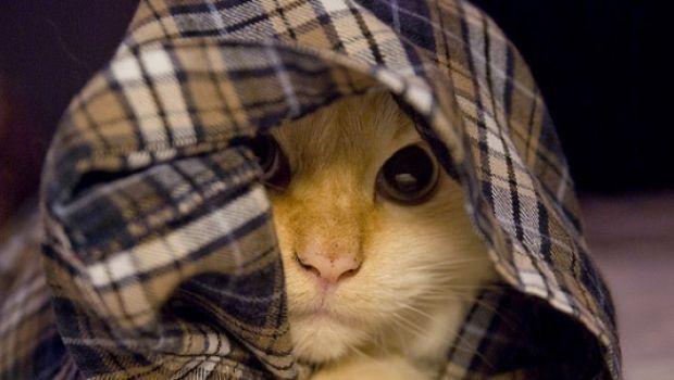 Foto divertenti di gatti in pigiama