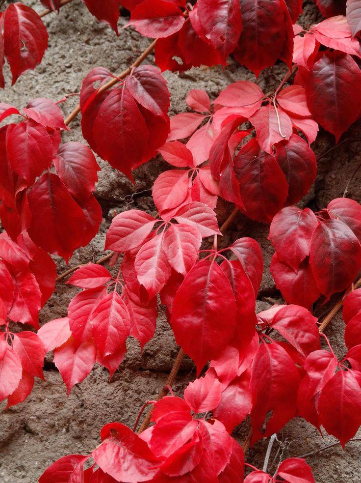 Foliage autunnale come spunto per un colore d'accento di una parete di casa che si fa notare