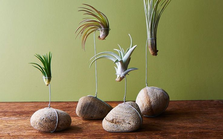 River rocks add a bold earthy statement to this tillandsia display.